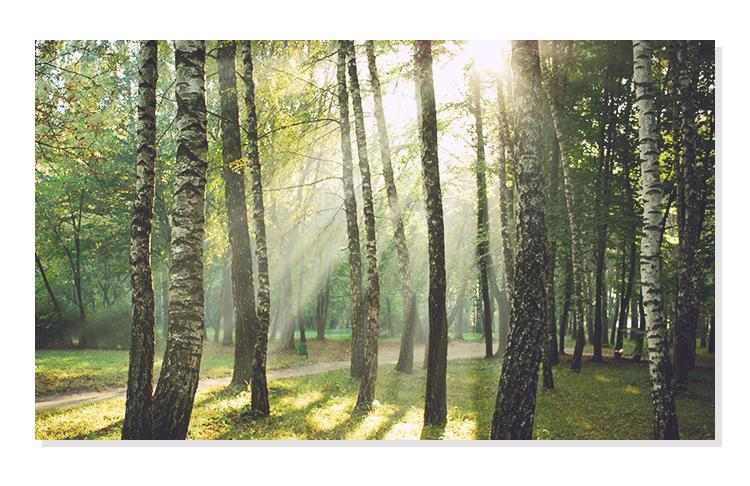 APIEU-FOREST-BATH-BODY-WASH_geranium_10.jpg