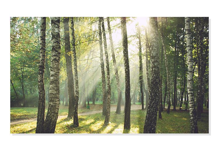 APIEU-FOREST-BATH-BODY-LOTION_geranium_10.jpg